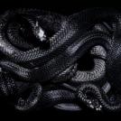 Venom Log